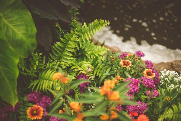 garden, lawn