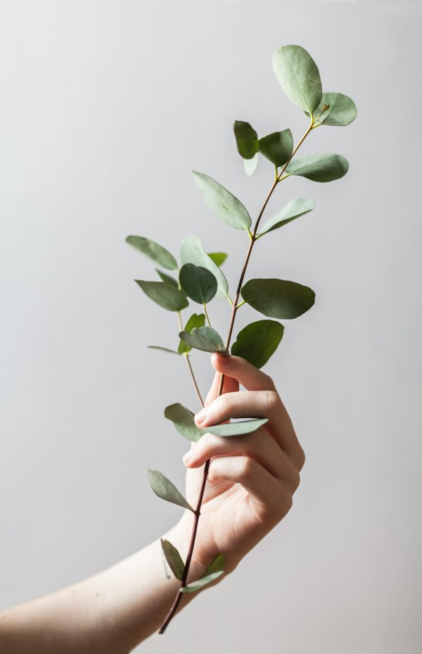 eco-friendly, green energy