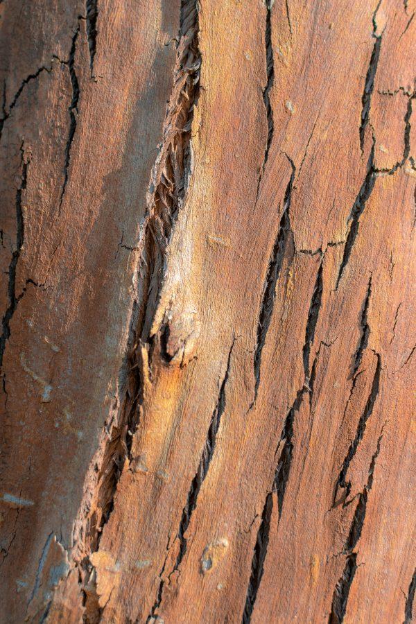 termites, white ants