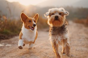 Seven Tips for Keeping Your Dog Happy & Healthy