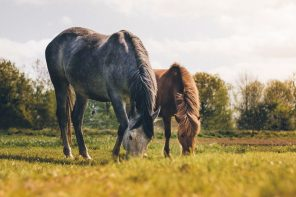 What We Know About CBD Oil For Horses