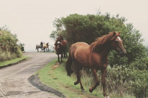 CBD Oil for Horses – Understanding its Many Benefits