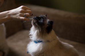 Dry cat food good and senior pets